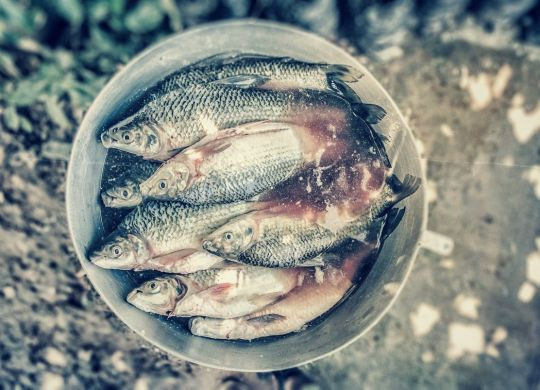 aliments soignent poissons-min