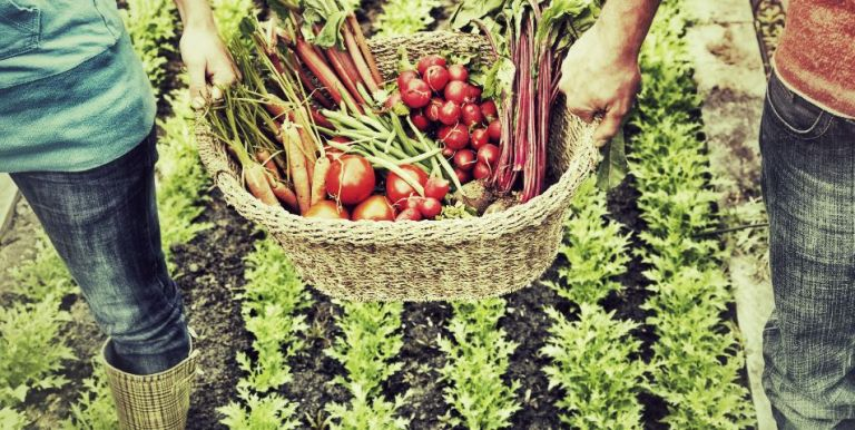 les aliments sources de vitamine A