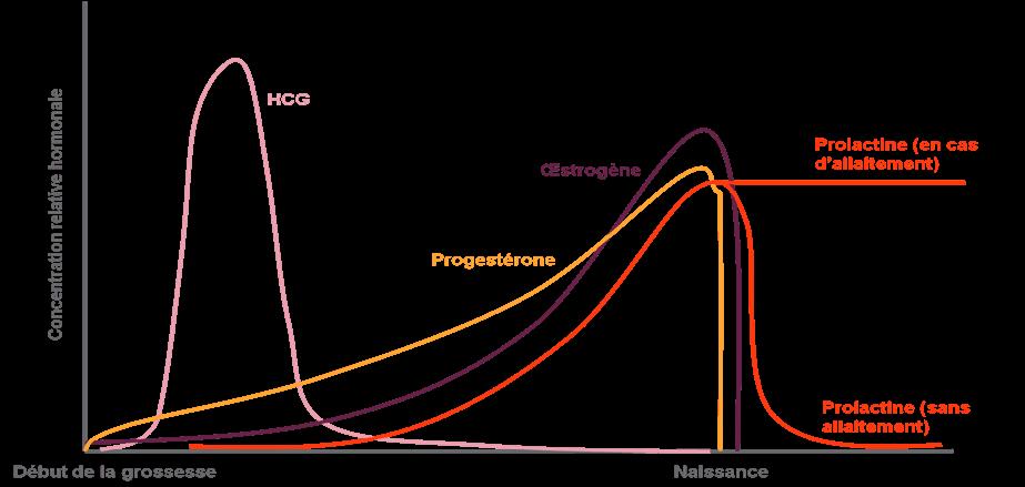 hormones durant la grossesse