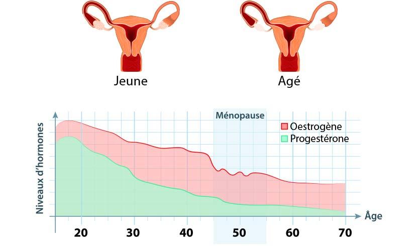 ménopause hormones