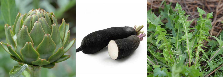 artichaut radis noir et pissenlit