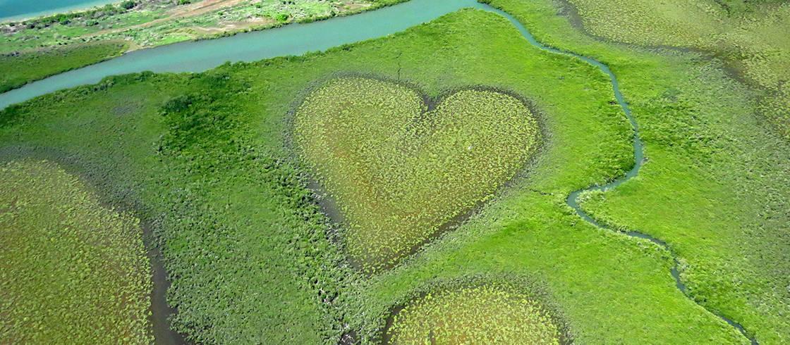 Le Coeur De Voh