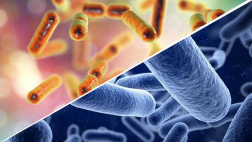Probiotique Et Sante Quels Liens