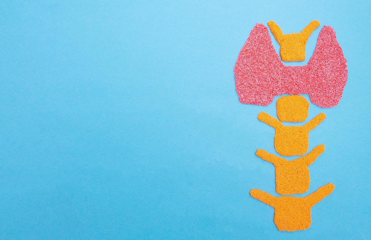 Plasticine Thyroid Gland On A Blue Background. Thyroid Disease Concept, Nodular Goiter, Cancer. Hyperfunction Treatment, Copy Space