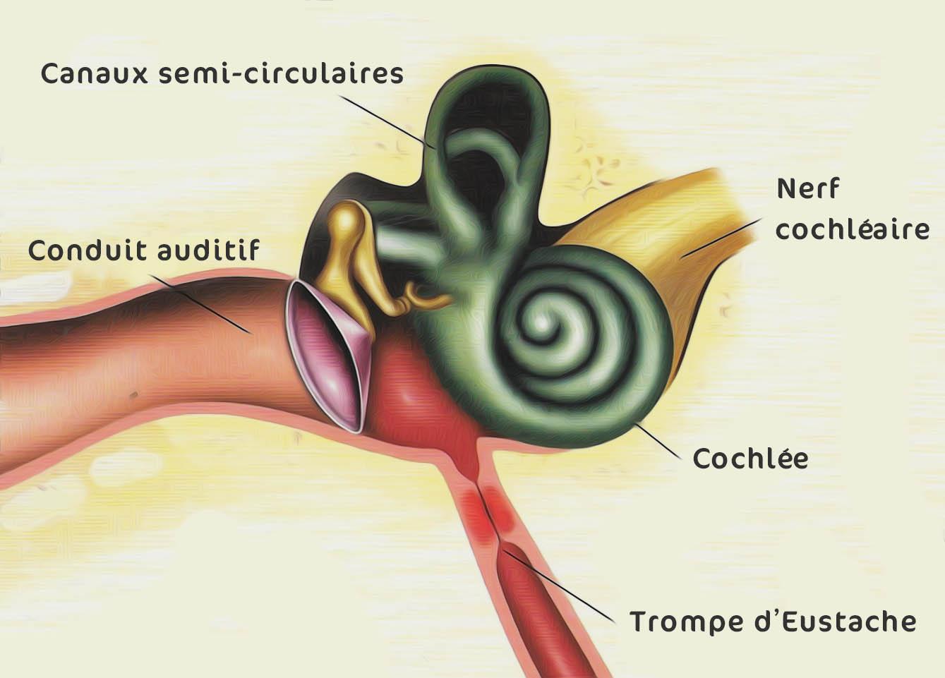 Shema Acouphene Canaux Semi Circulaires