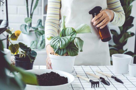 bouteille de pulvérisation arrosant des plantes