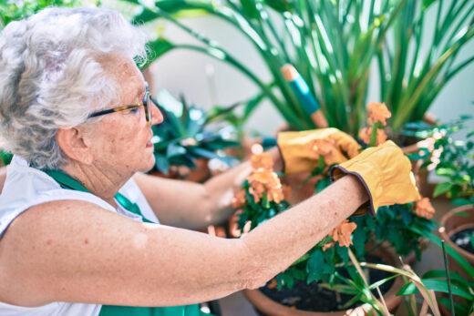 femme agée soigne ces plantes vertes